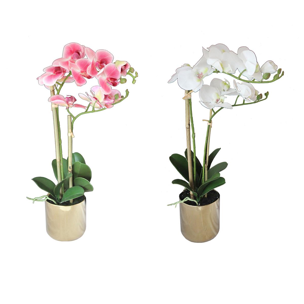 Dekorativno cveće- orhideja MUS-226
