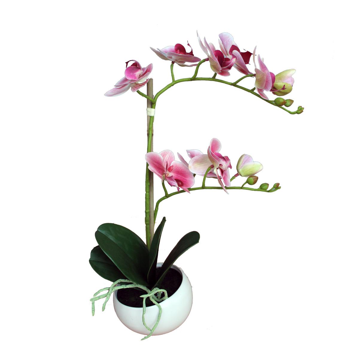 Dekorativno cveće- orhideja MUS-227